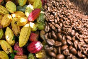 Sierra y Selva Exportadora identifica siete cadenas productivas en Madre de Dios