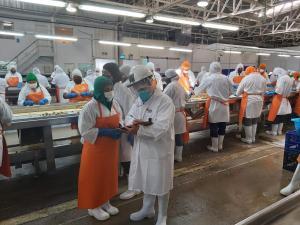 Sunafil inspecciona 49 empresas agroindustriales de Ica