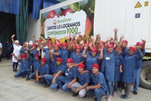 Sunshine exportó su contenedor número 1.000 de mango fresco en la presente campaña