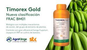 Timorex Gold previene y controla el Fusarium oxysporum R4T en banano