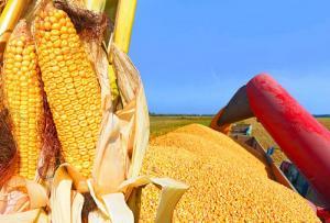 TLC con Estados Unidos bajaría precio interno del maíz amarillo