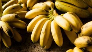 Transforman desechos de banano en harina y cosméticos