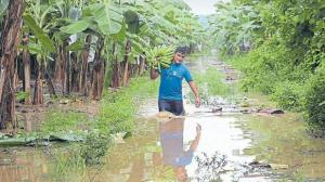 Tumbes: más de 5 mil hectáreas de plátanos y limones dañados por lluvias