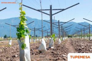 TUPEMESA brinda soluciones para mejorar la productividad del cultivo y proveer un ahorro de hasta 40% en costos