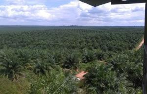 Ucayali: Fiscalía Penal de Campo Verde archivó denuncias contra Ocho Sur