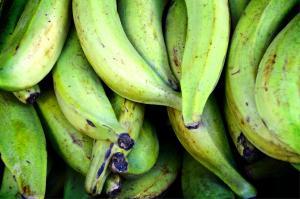 Ucayali: Productores de plátano sostienen ventas de 120 toneladas para la industria de chips