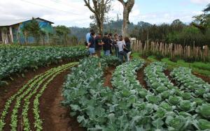Unión Europea pretende restaurar el 70% de las tierras agrícolas para 2030