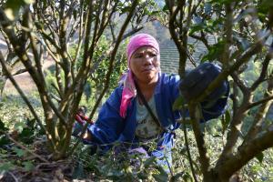 Urgen mejoras en acceso a la tierra, al agua y de conectividad para cerrar brechas de género que afectan la seguridad alimentaria en las Américas