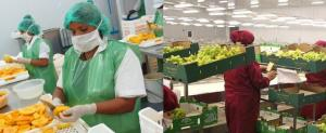 Uva y mango lideraron ranking de exportaciones no tradicionales en el primer trimestre del 2018