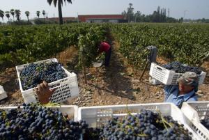 Uvas y arándanos empujan el crecimiento de las exportaciones no tradicionales
