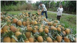 Valor Bruto total de la Producción del Subsector Agrícola en 2020 fue de S/ 23.463 millones