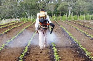 Ventas de productos agroquímicos en Perú crecerían 5% este año