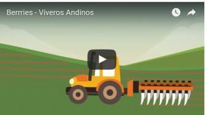 Viveros Andinos brinda a productores todos los servicios para iniciar proyecto de frambuesas