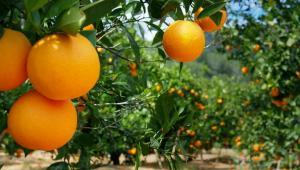 Vraem: Devida transfiere 680 mil soles para incrementar productividad de cultivos cítricos