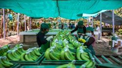 8.850 agricultoras de comunidades campesinas del Perú se empoderan como líderes de cadenas productivas