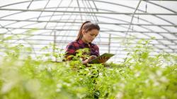ABB: Reforma digital en el agro aumentaría en 45% la productividad del sector