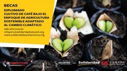 Abren convocatoria para becas de diplomado en caficultura sostenible
