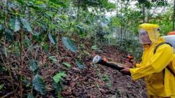 Acción Popular plantea prohibir el glifosato, el principal herbicida usado en el país