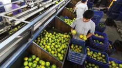 ADEX: Exportaciones peruanas cayeron en valor -15.3% en el 2020