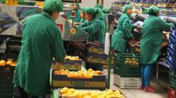 ADEX plantea incremento temporal del Drawback a 10% para impulsar exportaciones y economía
