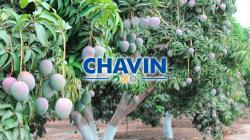 Agrícola y Ganadera Chavín de Huantar planea duplicar capacidad de sus plantas