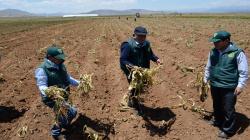 Agricultores de San Martín accederán al Seguro Agrícola Catastrófico