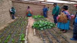 Agricultores de zonas altoandinas logran aumentar producción de alimentos con implementación de fitotoldos