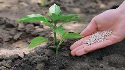 Agricultores deben usar fertlizantes especializados que les aseguran mayor productividad y son más amigables con el medio ambiente