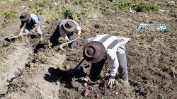 Agricultores demostraron fortaleza en etapa más difícil de la pandemia