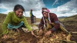 """""""Agricultura Familiar es clave en todo sistema agroalimentario"""""""