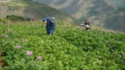AGRICULTURA Y MINERIA: MODELO PARA ARMAR
