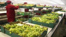 Agro impulsaría crecimiento de las exportaciones totales en 2.4% para este año