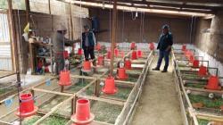 Agro Rural cofinanciará planes de negocios rurales en beneficio de 17.400 agricultores