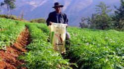 Agro Rural comercializará 1.500 toneladas de guano de las islas a precio social a pequeños productores