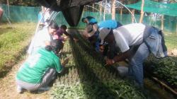 Agro Rural y Municipalidad de Chachapoyas producirán 103 mil plantones forestales y frutales