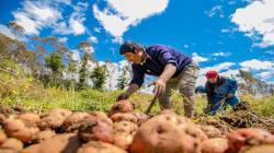 Agrobanco colocaría créditos por aproximadamente S/ 300 millones este año en beneficio de 30 mil pequeños productores