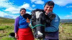 Agrobanco ofrece créditos para productores ganaderos