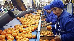 Agroexportaciones peruanas crecieron 5.3% en los primeros 9 meses del año