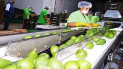 Agroexportaciones peruanas crecieron en valor 19% en los primeros 5 meses del 2021