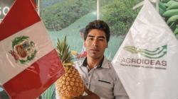 Agroideas invirtió S/ 90.1 millones en Planes de Negocio y Proyectos de Reconversión Productiva