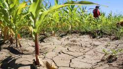 ANA atiende demanda de agua en valles agrícolas de Piura