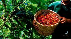 Analizarán formas de financiamiento de la cadena de valor del café ante nueva realidad del Covid-19