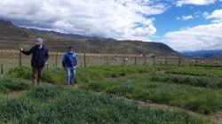 Áncash: investigadores identifican especies de pastos nativos tolerantes a las heladas