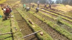 Áncash: más de 51 mil plantones nativos serán instalados en zonas altoandinas para promover conservación de suelos e incremento de nivel hídrico