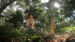 Anuncian inversión de S/ 430 millones para fomento y gestión sostenible de la producción forestal