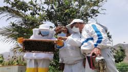 Aplicación de estrategias sanitarias del Senasa resguardan producción apícola en 22 regiones del país