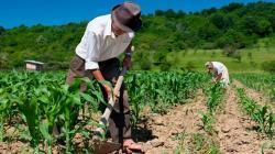 Aprueban contrato de Fideicomiso de Administración del FAE-Agro