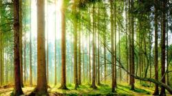 """Aprueban la """"Agenda Nacional de Investigación Forestal y de Fauna Silvestre 2020-2025"""""""