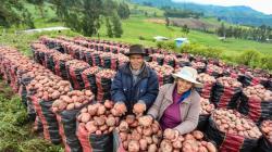 Aprueban otorgamiento de garantía para el FAE Agro