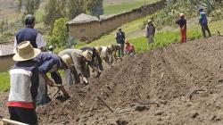 Aprueban primer programa de financiamiento por S/ 250 millones para pequeños agricultores agrarios